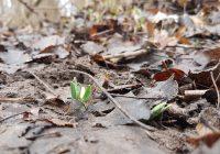 Der Frühling zeichnet sich ab