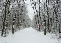 Schnee in der Unteren Lobau