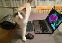 Christine Gerstenmayer: Computer, Katzen und Naturschutz
