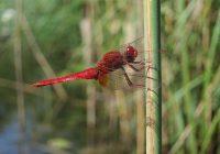 Freitag, 30. Juni: Exkursion zu den Libellen