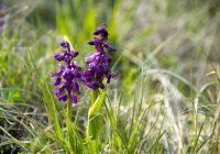 Die ersten Orchideen