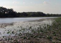 Nach wie vor keine Lösung: Wasserwerke gegen Nationalpark