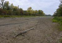 Lobau vertrocknet: Entscheidung verschoben auf irgendwann