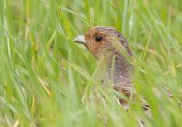 BirdLife: Lichtblick für die Vogelwelt