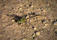 Grüne Flussjungfer am Schwarzen Loch