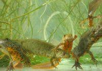 Lobau: Geschützte Tierarten der Gewässer und Feuchtlebensräume